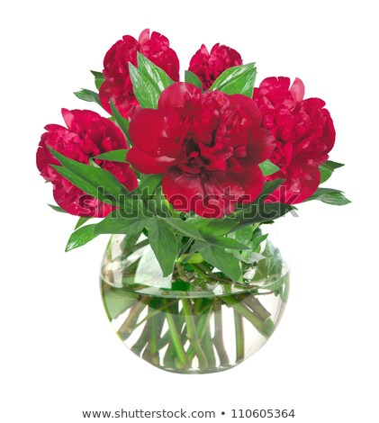 beautiful red peonies in glass vase with bow isolated on white stock photo © tetkoren