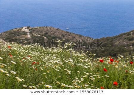 フィールド · 山 · ギリシャ · 空 · 草 · 太陽 - ストックフォト © AntonRomanov
