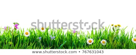 Сток-фото: Flowers Grass