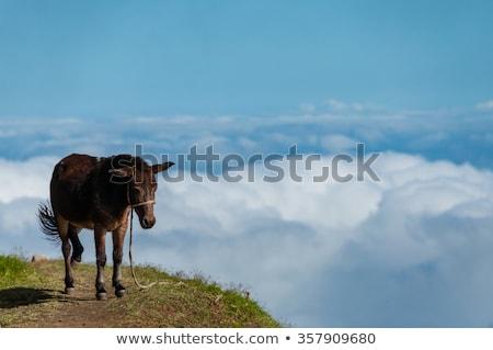 クローズアップ · ロバ · 立って · 山 · 雲 - ストックフォト © attiarndt