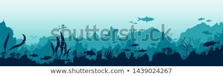 An underwater scenery Stock photo © bluering