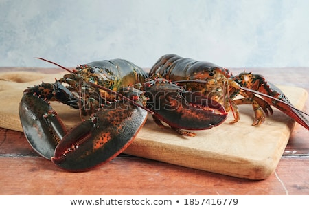two red lobsters ready for cooking stock photo © ozgur