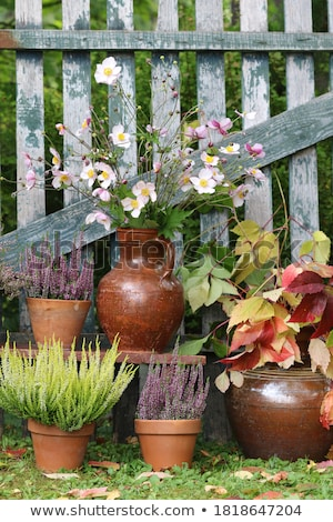 Wooden fence and potted plants Stock photo © bluering