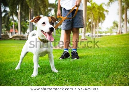köpek · yürüyüş · çim · saç · yeşil - stok fotoğraf © AvHeertum