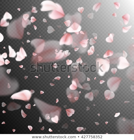 Stockfoto: Sakura · bloemblaadjes · witte · eps · 10 · vector