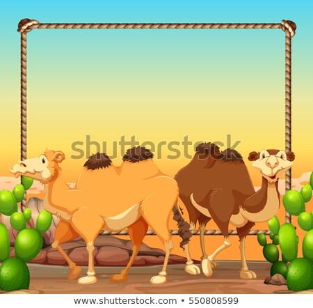 Quadro modelo dois camelos deserto ilustração Foto stock © bluering