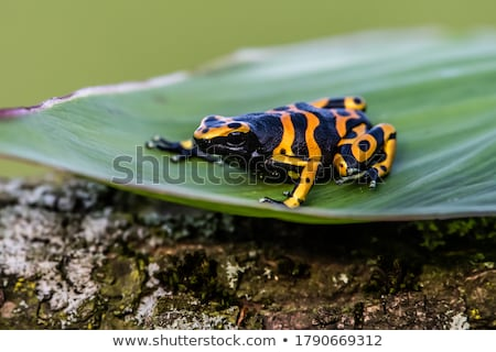 Stockfoto: Rain Forest Tropical Theme With Colorful Frog