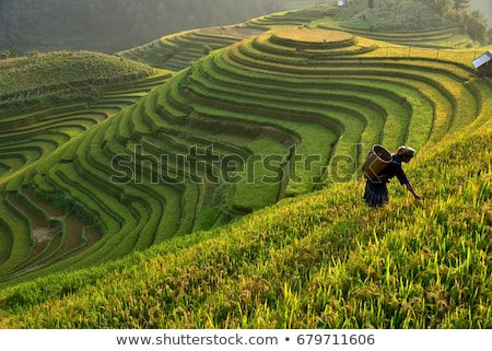 Montagnes riz champs village eau paysage Photo stock © joyr