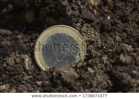 Harvesting euro money, conceptual agricultural image Stock photo © stevanovicigor
