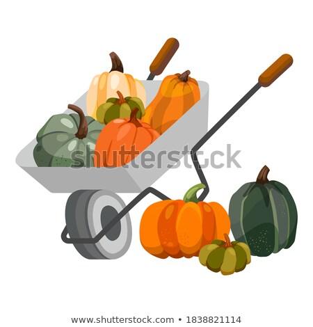 Wheelbarrow and onion. vegetables in garden trolley. big harvest Stock photo © popaukropa
