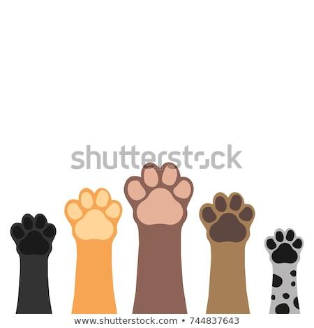 Poot banner vector dier huisdier voetafdruk Stockfoto © Andrei_