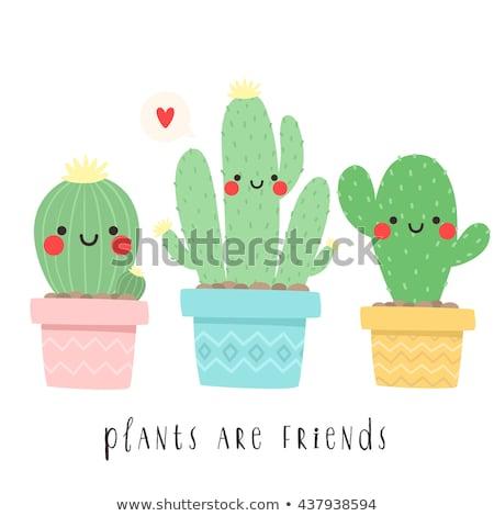 Cute verde Cartoon cactus amigos feliz Foto stock © adrian_n