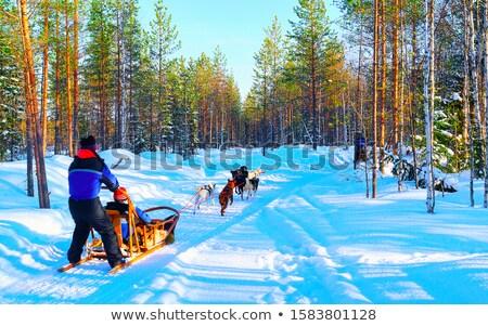 女の子 冬 ハスキー チーム 犬 ストックフォト © FOTOYOU