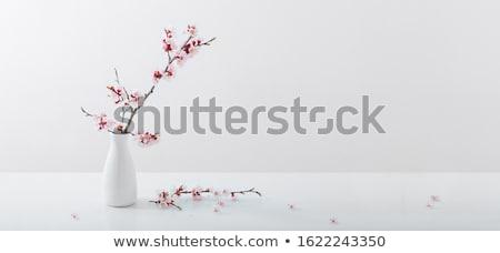 Kiraz çiçeği afişler örnek vektör ağaç bahar Stok fotoğraf © yo-yo-