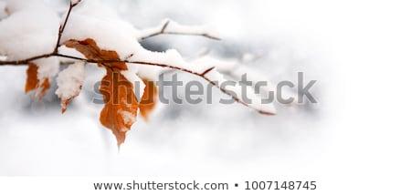 Fagyott levelek hideg ősz nap bokor Stock fotó © Juhku