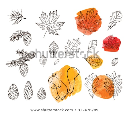 Stock photo: Squirrel and orange maple leaves.