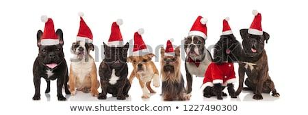 Oito bonitinho feliz cães Foto stock © feedough