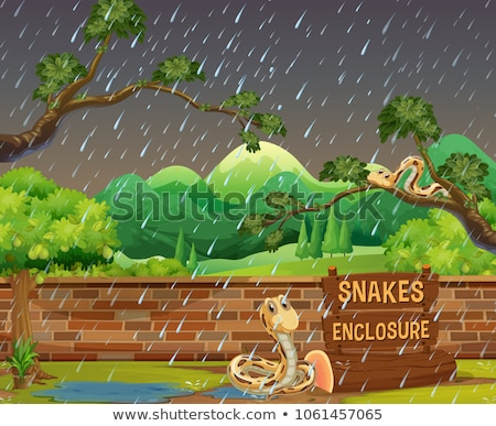 Zoo scène serpents pluie illustration jardin Photo stock © colematt