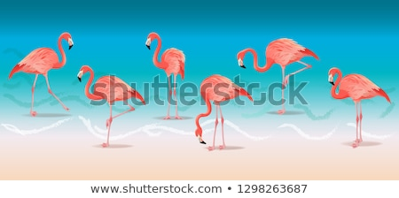 ストックフォト: Exotic Pink Flamingos Walking On The Hot Summer Beach Pink Flamingos Set Vector Illustration