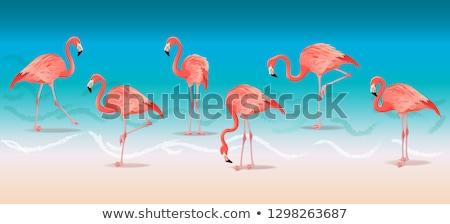 Exotic pink flamingos walking on the hot summer beach. Pink flamingos set vector illustration. Stock photo © MarySan