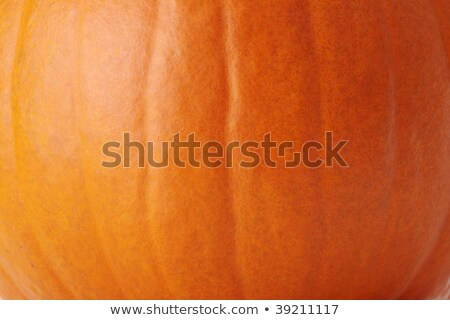 close up of pumpkin with stem Stock photo © dolgachov