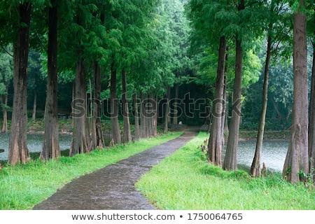 Jelenet esik az eső park illusztráció fű erdő Stock fotó © colematt