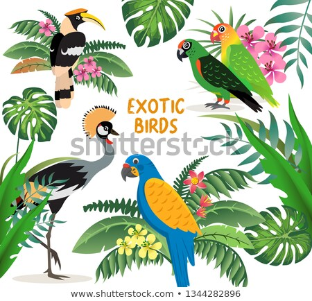 Exotic birds set, crowned crane, colorful parrots lovebirds and blue with yellow wings macaw, friend Stock photo © MarySan
