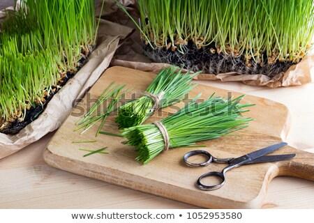 Bahçıvan hasat buğday çimi bıçak kadın çim Stok fotoğraf © Kzenon