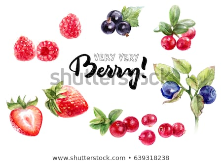 Raspberries, cranberries and blueberries on white background. Watercolor illustration Stock photo © ConceptCafe