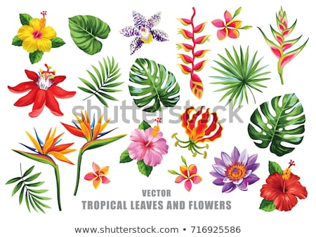 Stock photo: Summer card of tropical paradise flower plants background