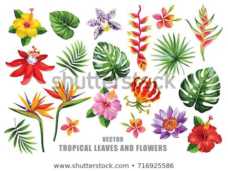 pássaro · paraíso · flor · palmeira · folha · primavera - foto stock © cienpies