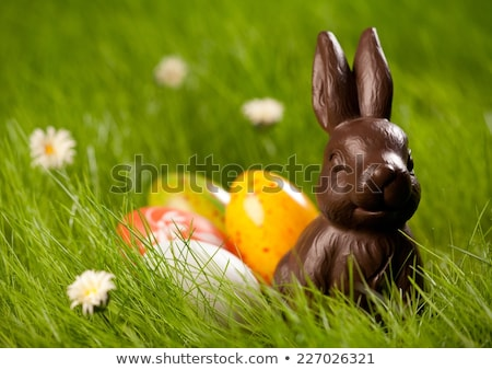 close up of chocolate bunny and easter eggs Stock photo © dolgachov