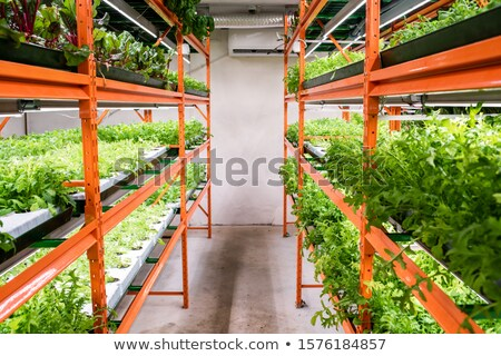 Aisle between large shelves with green seedlings of horticultural plants Stock photo © pressmaster