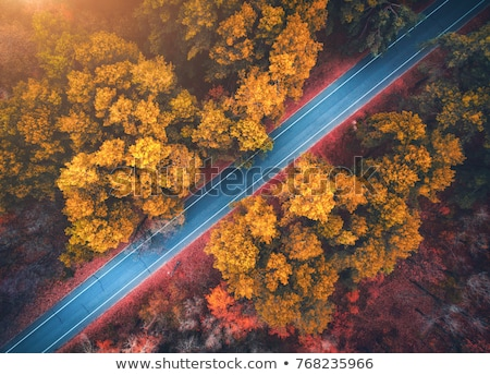 Aerial view of road in beautiful autumn forest at sunset. Beautiful landscape with empty rural road, Stock photo © galitskaya