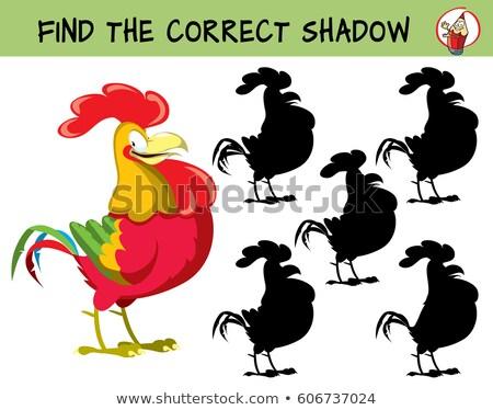 Cartoon gallo encontrar corregir sombra educativo Foto stock © natali_brill