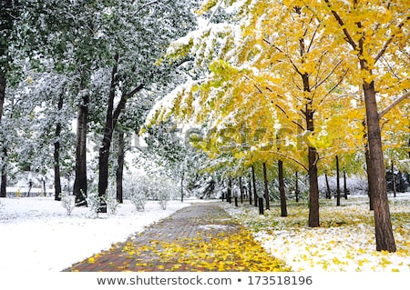 between autumn and winter Stock photo © sahua