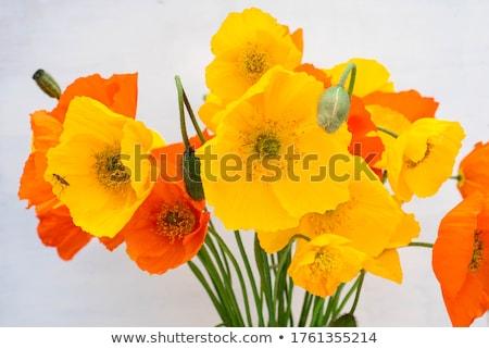 klaprozen · witte · voorjaar · ontwerp · zomer · groene - stockfoto © njaj