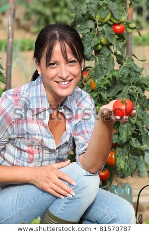 Woman in garden kneeling by tomato plant Stock photo © photography33