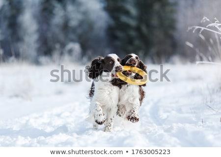 Noel köpek oyuncaklar altın çanta beyaz Stok fotoğraf © luapvision