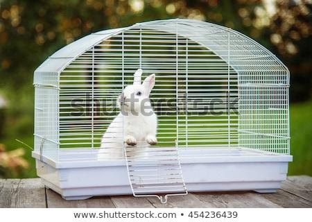 Blanche lapin cage ferme visage lock Photo stock © krugloff