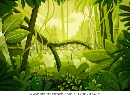 Denso giungla vegetazione scenario naturale full frame Foto d'archivio © prill