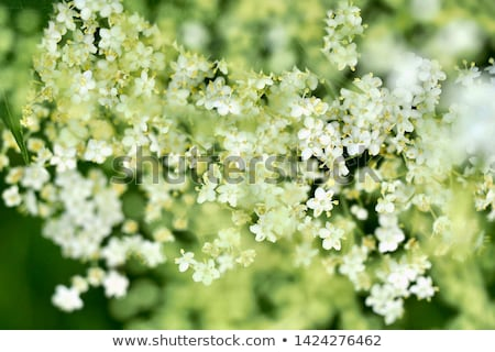 Gıda yeşil renk çalı meyve çiçeklenme Stok fotoğraf © jakatics