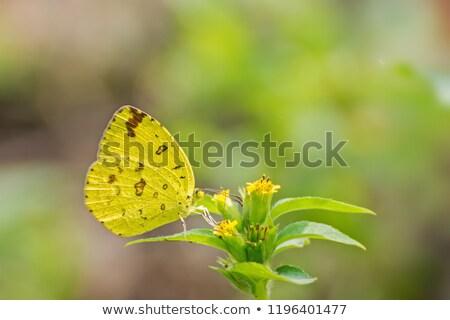 Grama amarelo borboleta céu flor água Foto stock © mariephoto