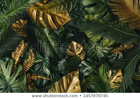 зеленый листва большой каштан Сток-фото © rmarinello