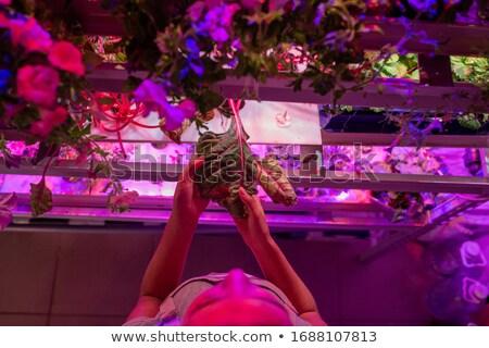 industrial · alface · folha · vidro · planta · legumes - foto stock © vaximilian