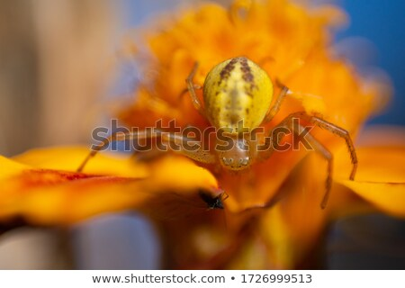 A small spider on a leaf Stock photo © michaklootwijk