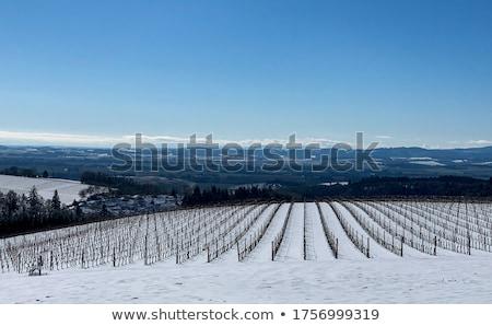 montanha · cena · ilustração · neve · verde · inverno - foto stock © mikemcd