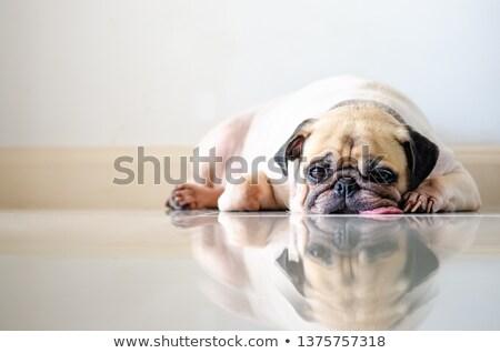 скучно · собака · портрет · женщины - Сток-фото © fxegs