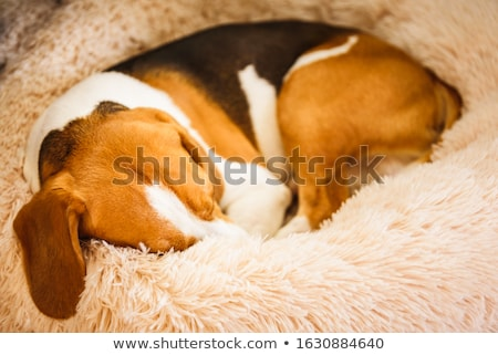 álmos vadászkutya kutya vektor rajz illusztráció Stock fotó © fizzgig