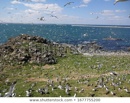 Seagull nesting stock photo © Laks